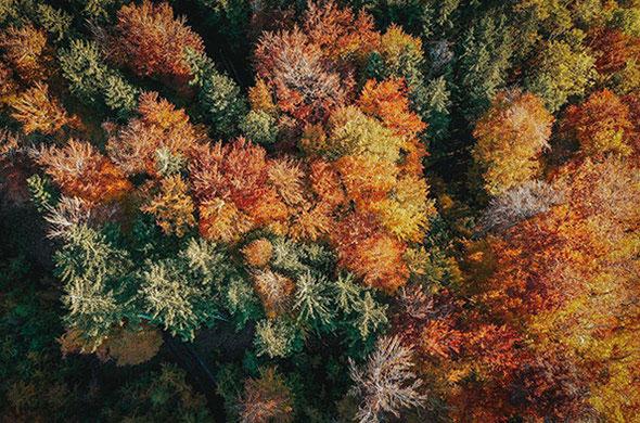 Luftbilder - aerial view